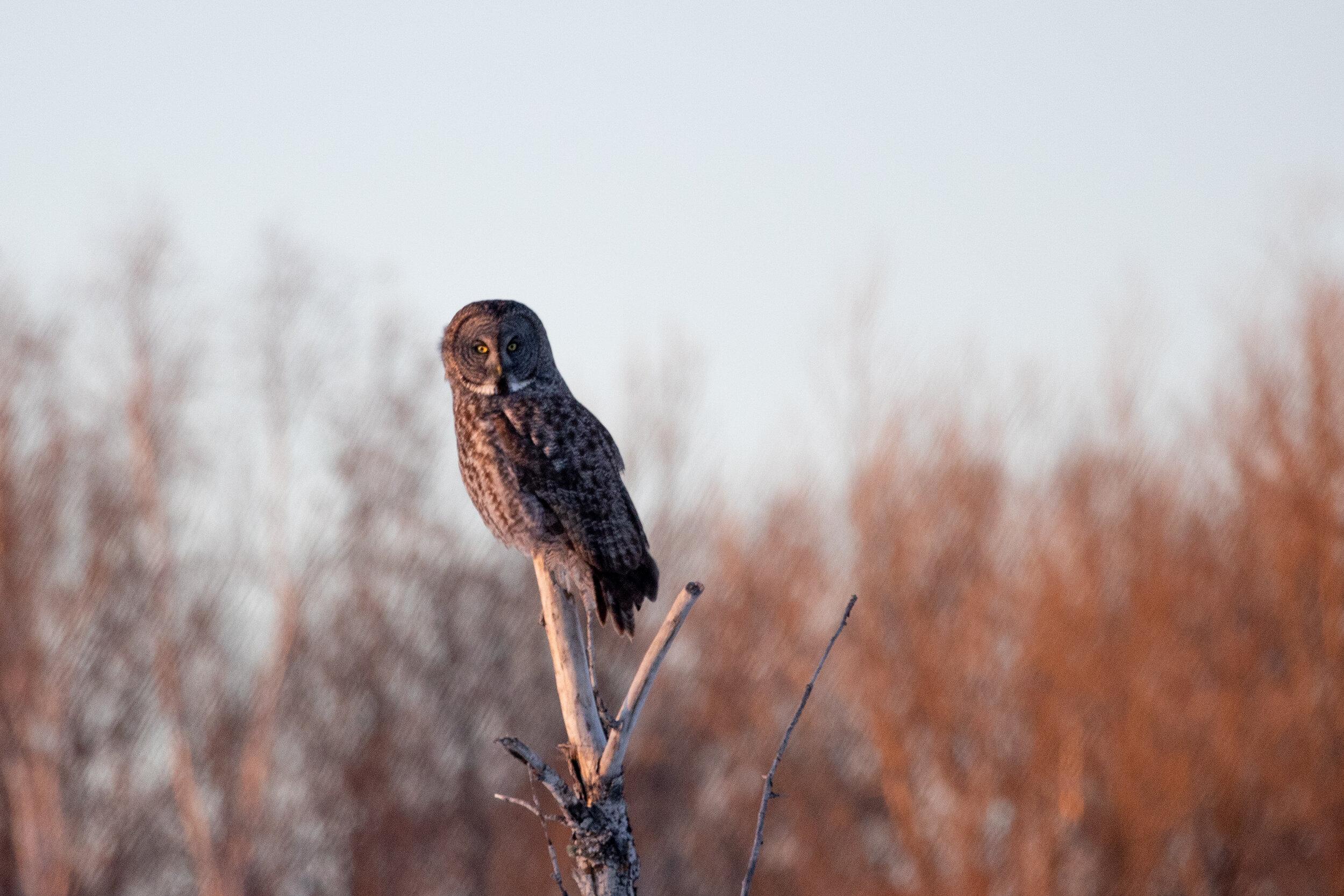 Finally....a new trip report! — Red Hill Birding