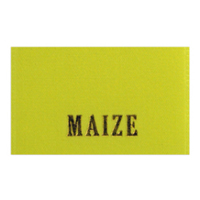 Ribbon Color_Maize.jpg