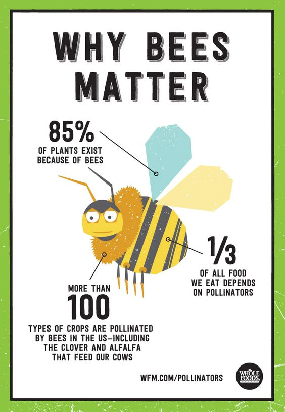Our friends at Whole Foods created this beautiful illustration showing us why bees matter. Take a read!