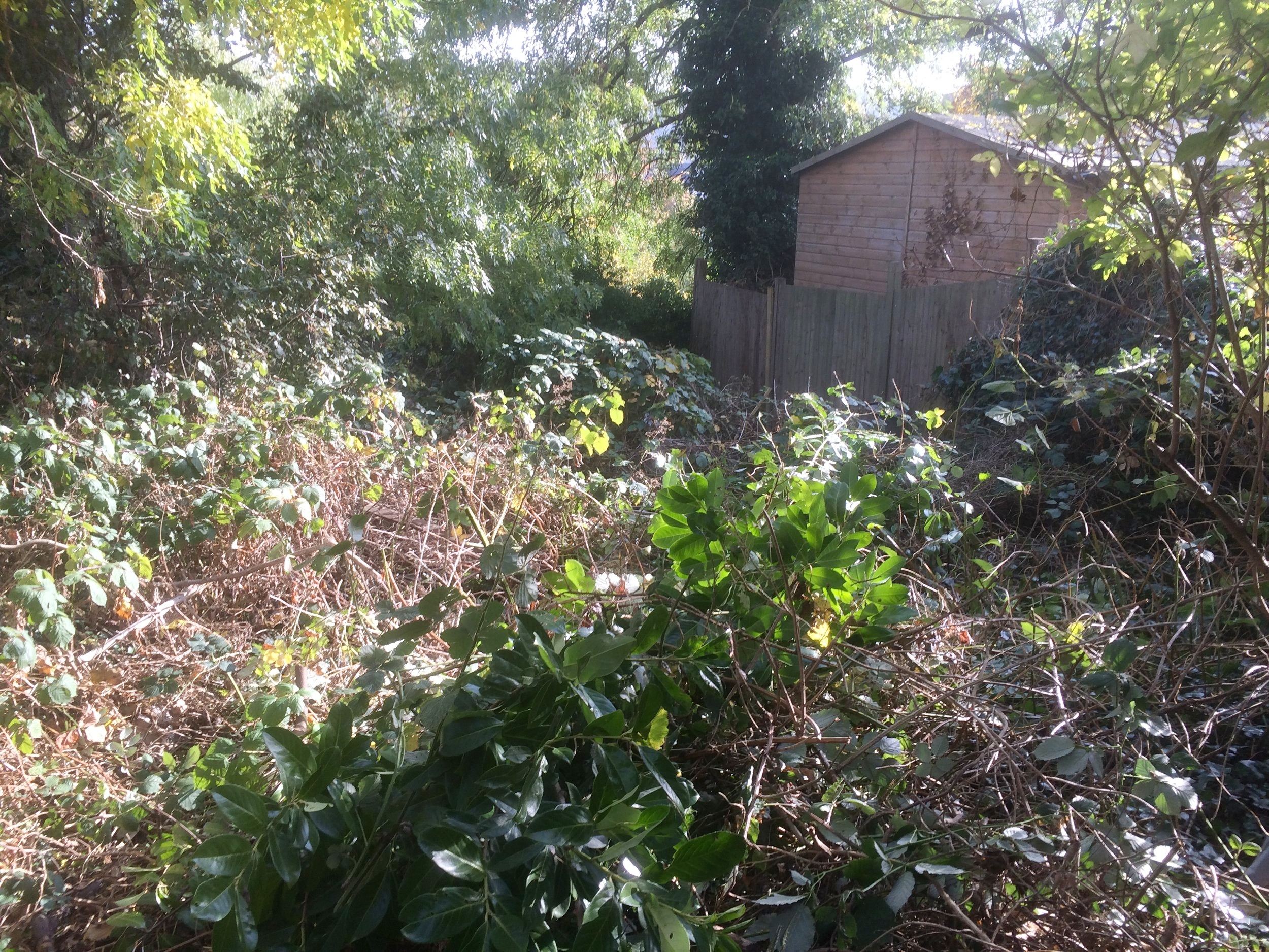 Permaculture volunteering opportunity south london