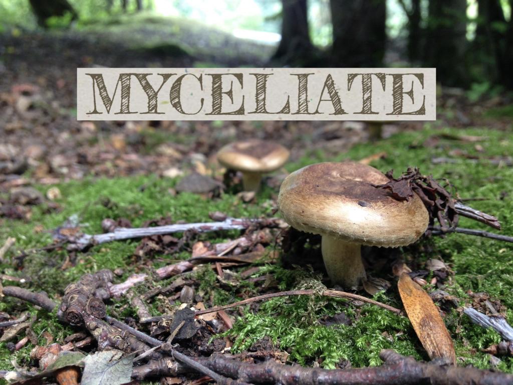 MYCELIATE2.jpeg