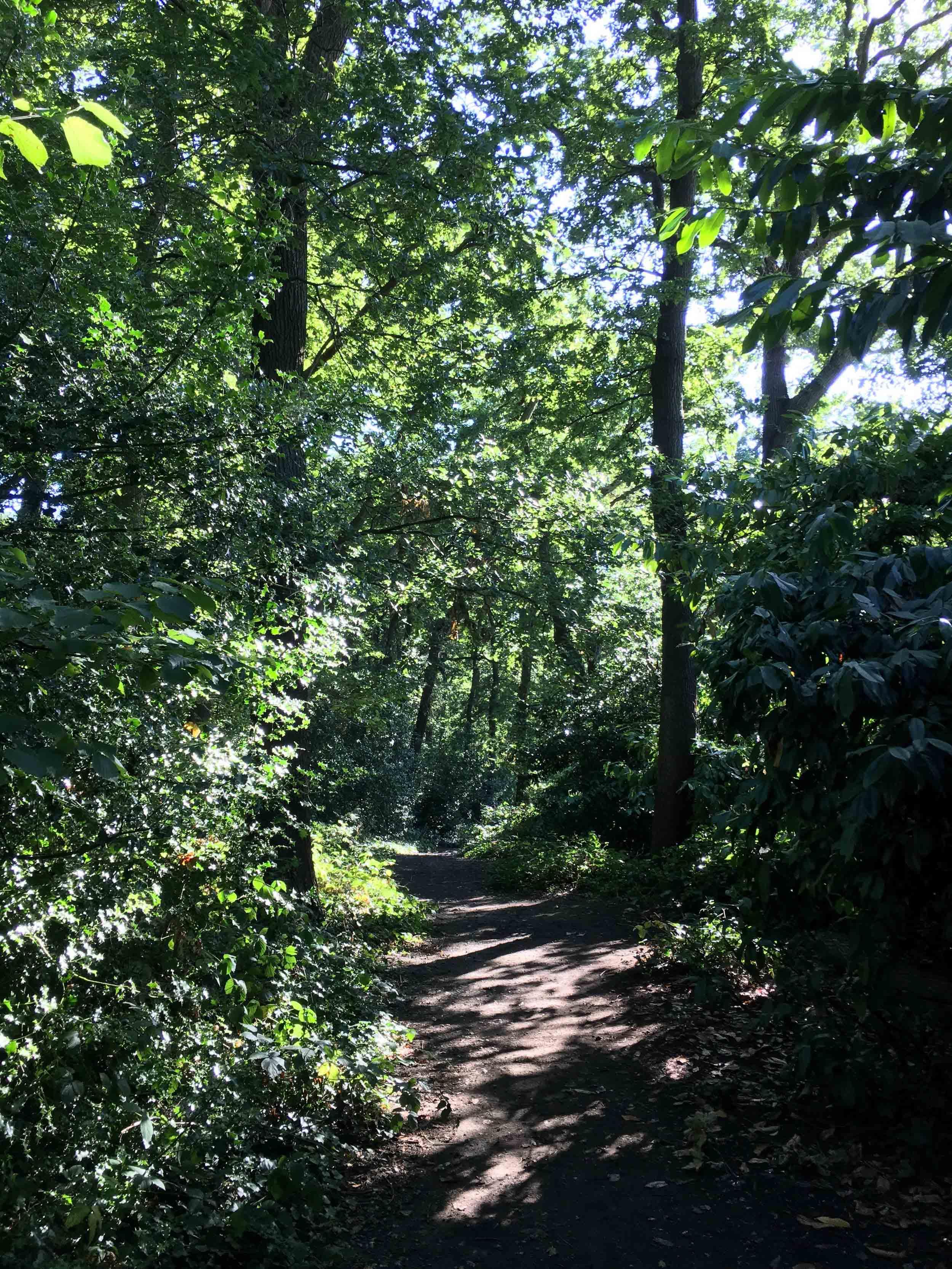woods-trees-nature-jaunt-gojauntly