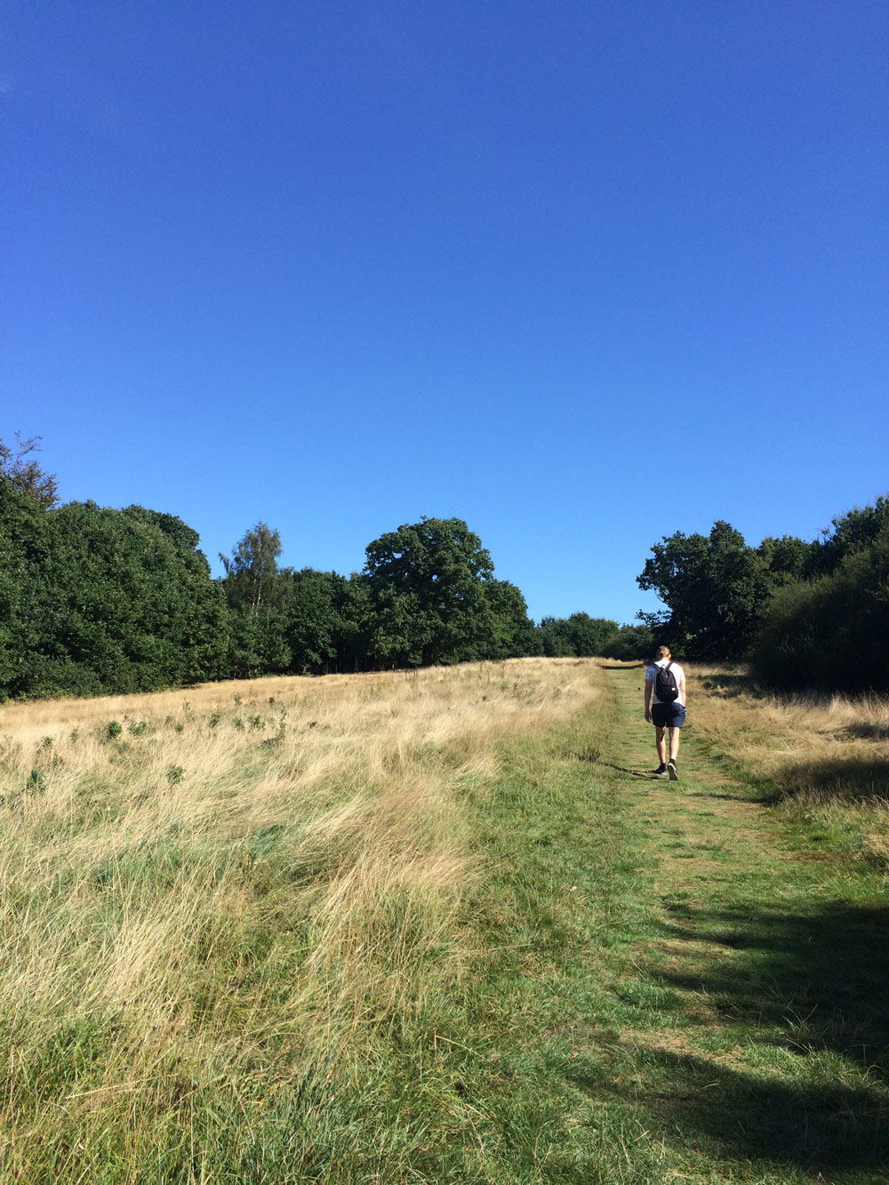 Walking-Epping-Forest-Go-Jauntly-London-woods