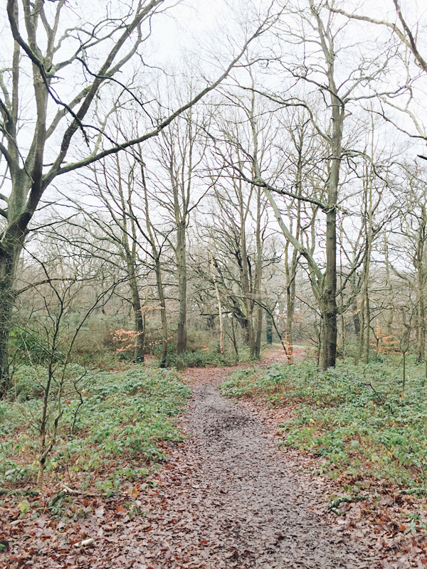 Go-jauntly-hampstead-heath-woods-london-walking