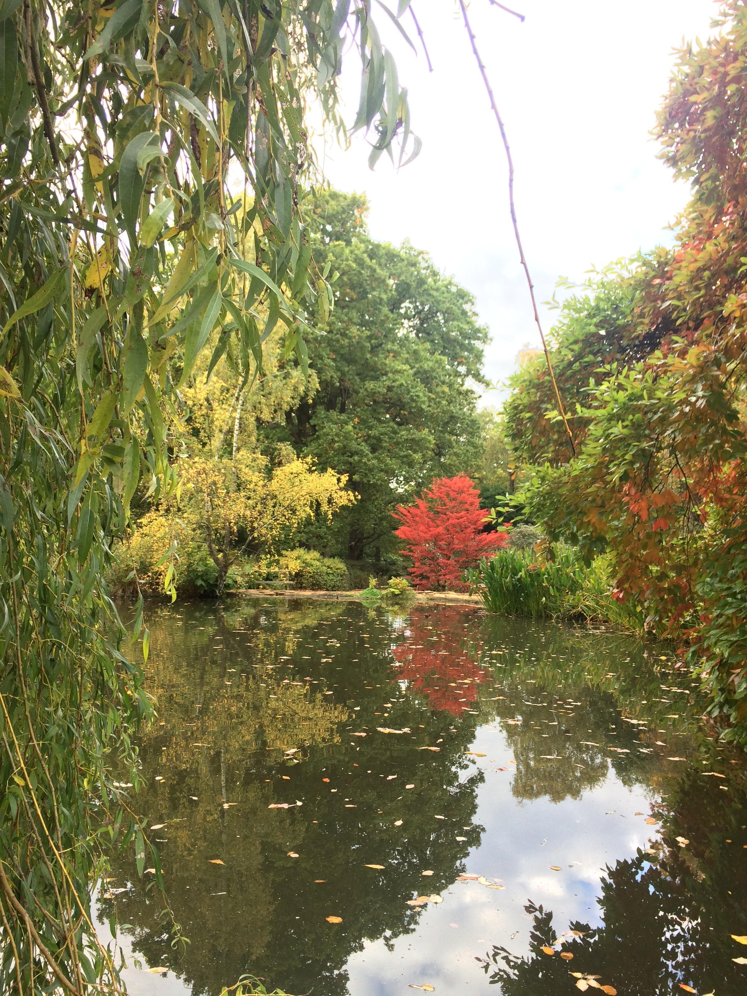 richmond-park-london-lake