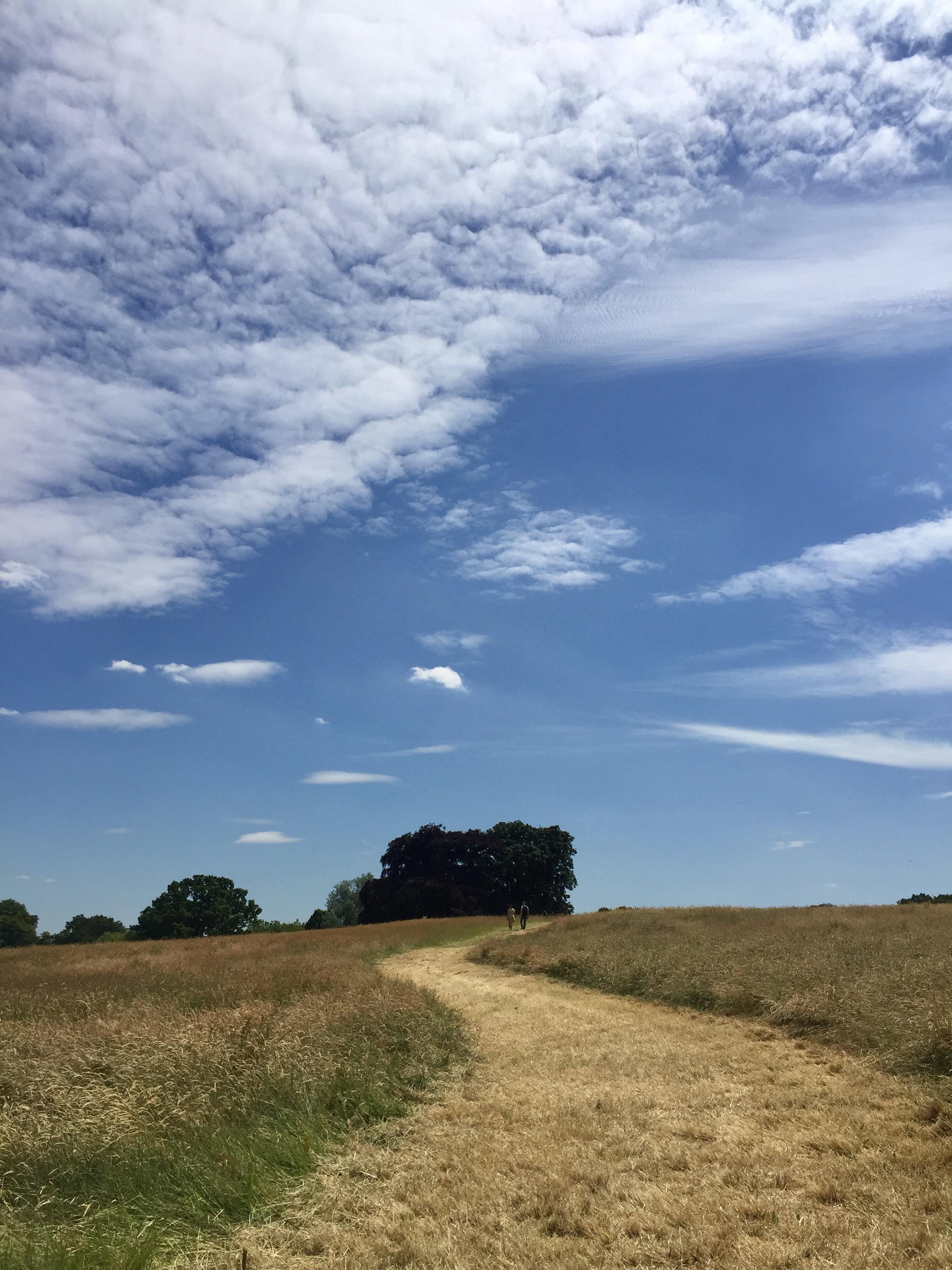 hampstead-heath-blue-skies