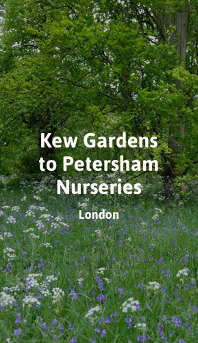 Kew Gardens to Petersham Nurseries.png