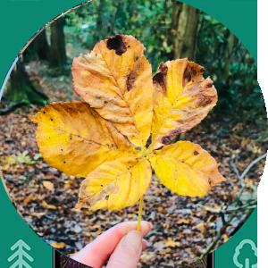 leaf_circle.png