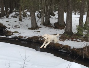 Henry leaping the Plove River
