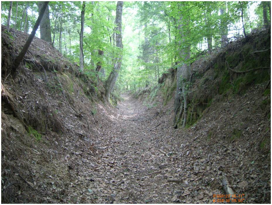"""Old Natchez Trace. The """"sunken road"""" was created by bison millenniums ago"""