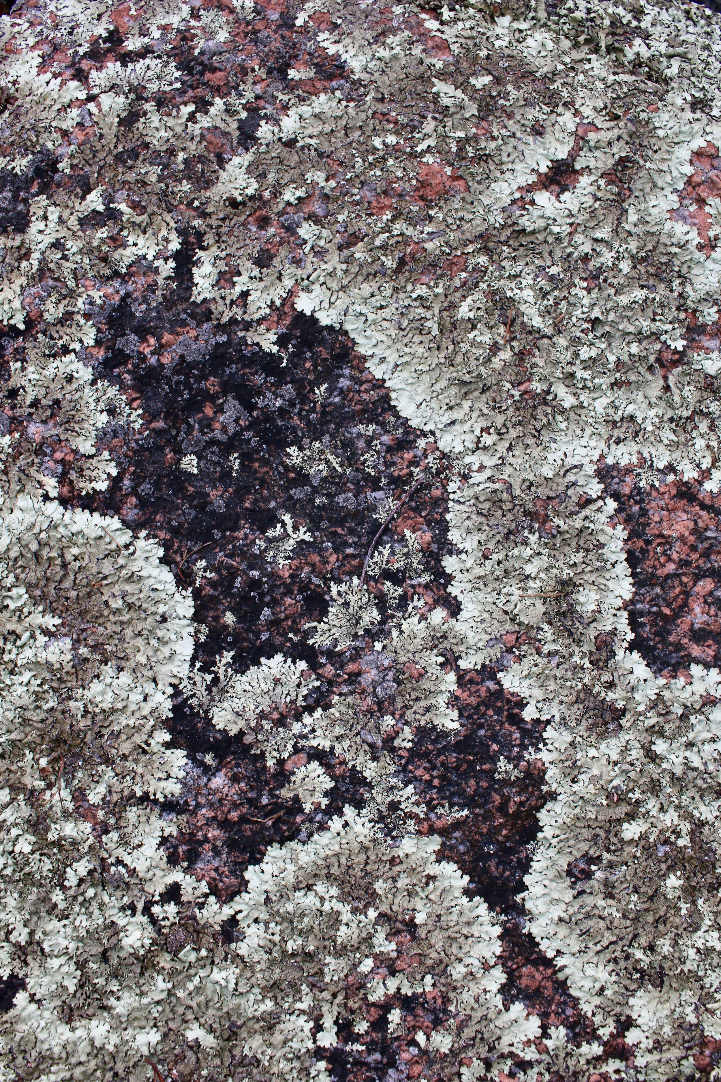 Rock Dunder 8- linden and lavender.jpg