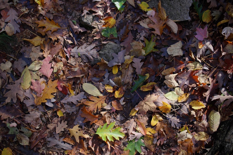 Autumn Life Oak Leaves | Linden and Lavender