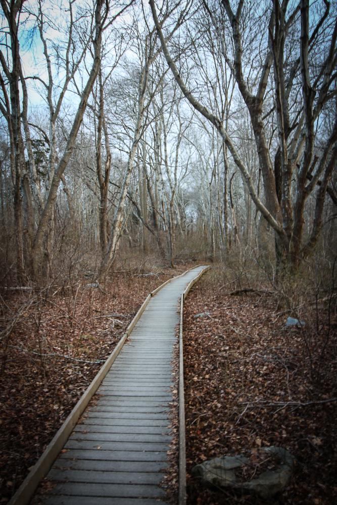 The wooden pathway | Linden & Lavender