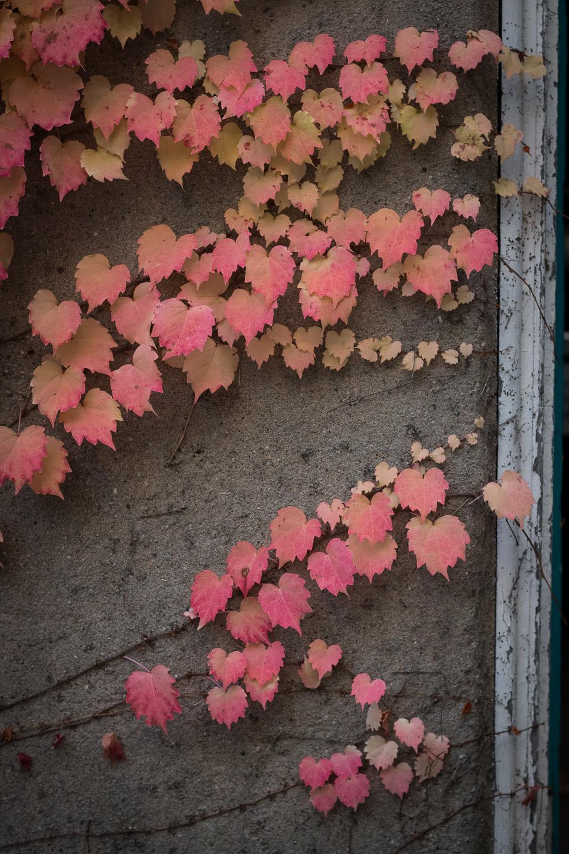 Autumn in Kingston | Linden & Lavender