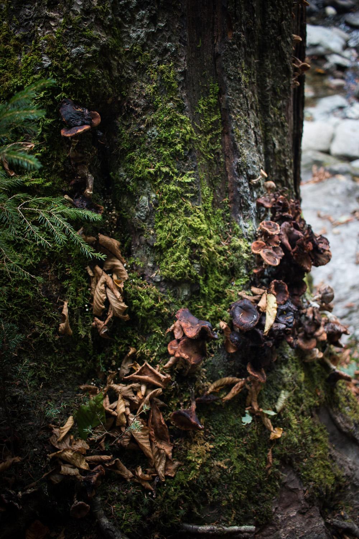 Mossy Tree   Linden & Lavender