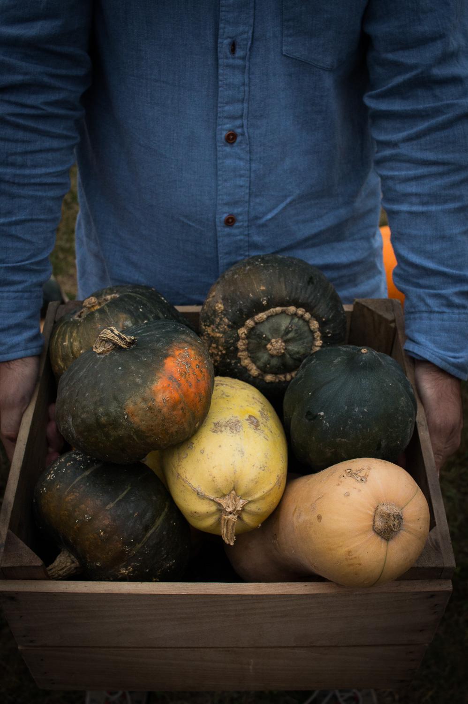 Squash and pumpkins   Linden & Lavender