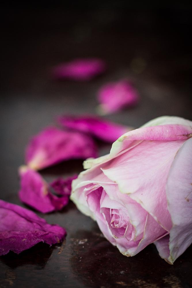 Rose | Linden & Lavender