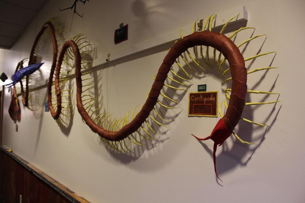 Centipede - 22 feet!, 2013