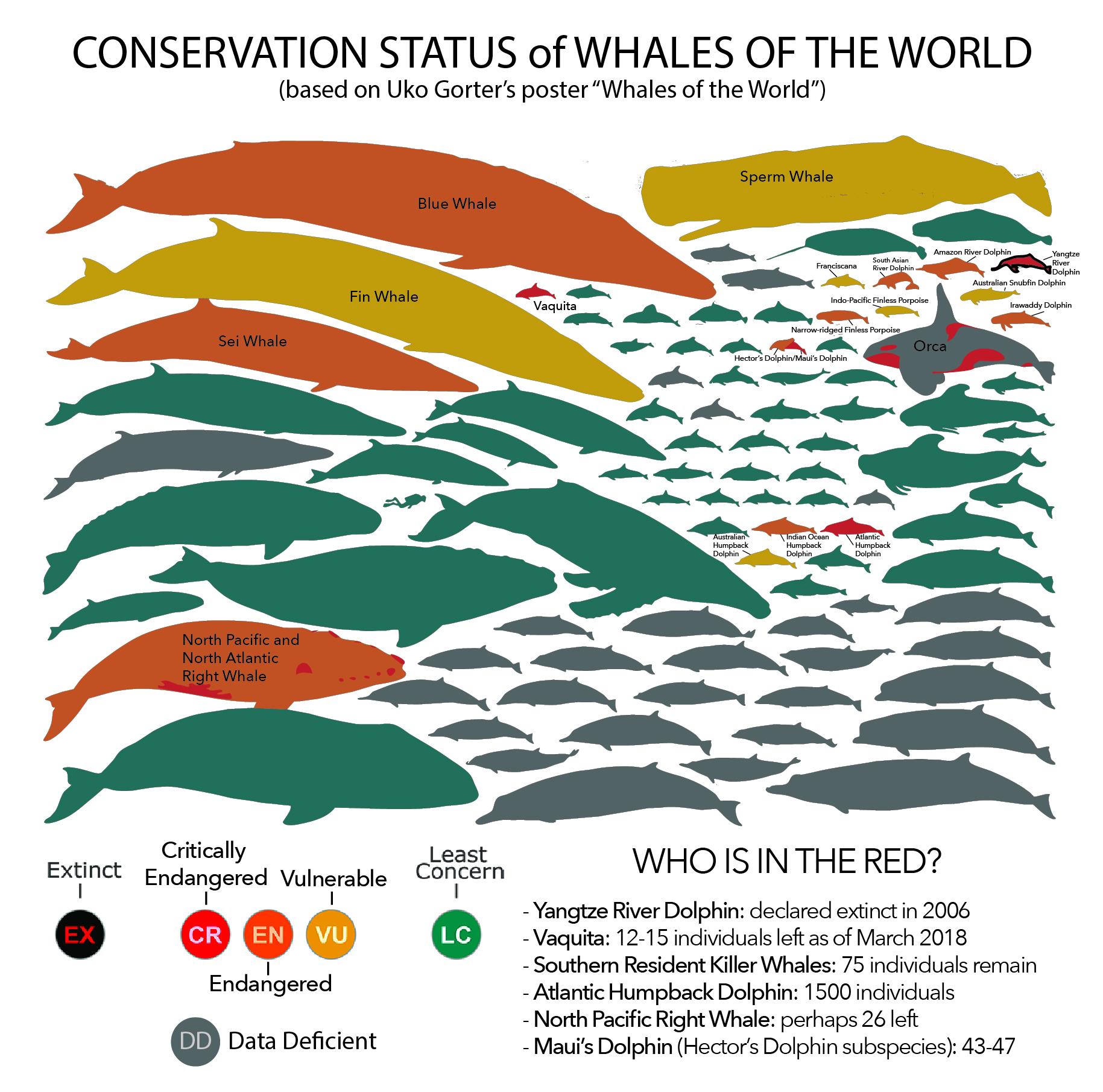 endangeredwhales.jpg