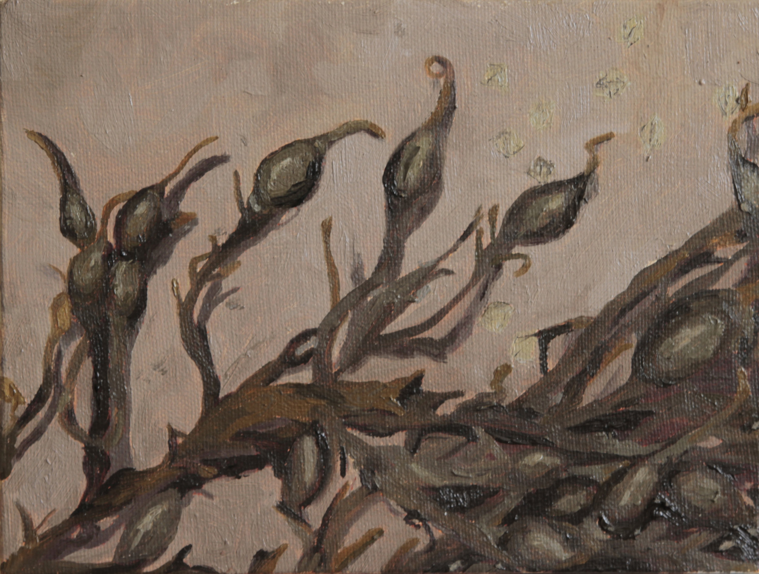 "Sea Grapes, Oil, 8""x6"", 2018"