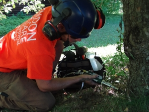Lyndon Tree Care injecting crabapple trunk in Amherst, MA to treat against gypsy moths