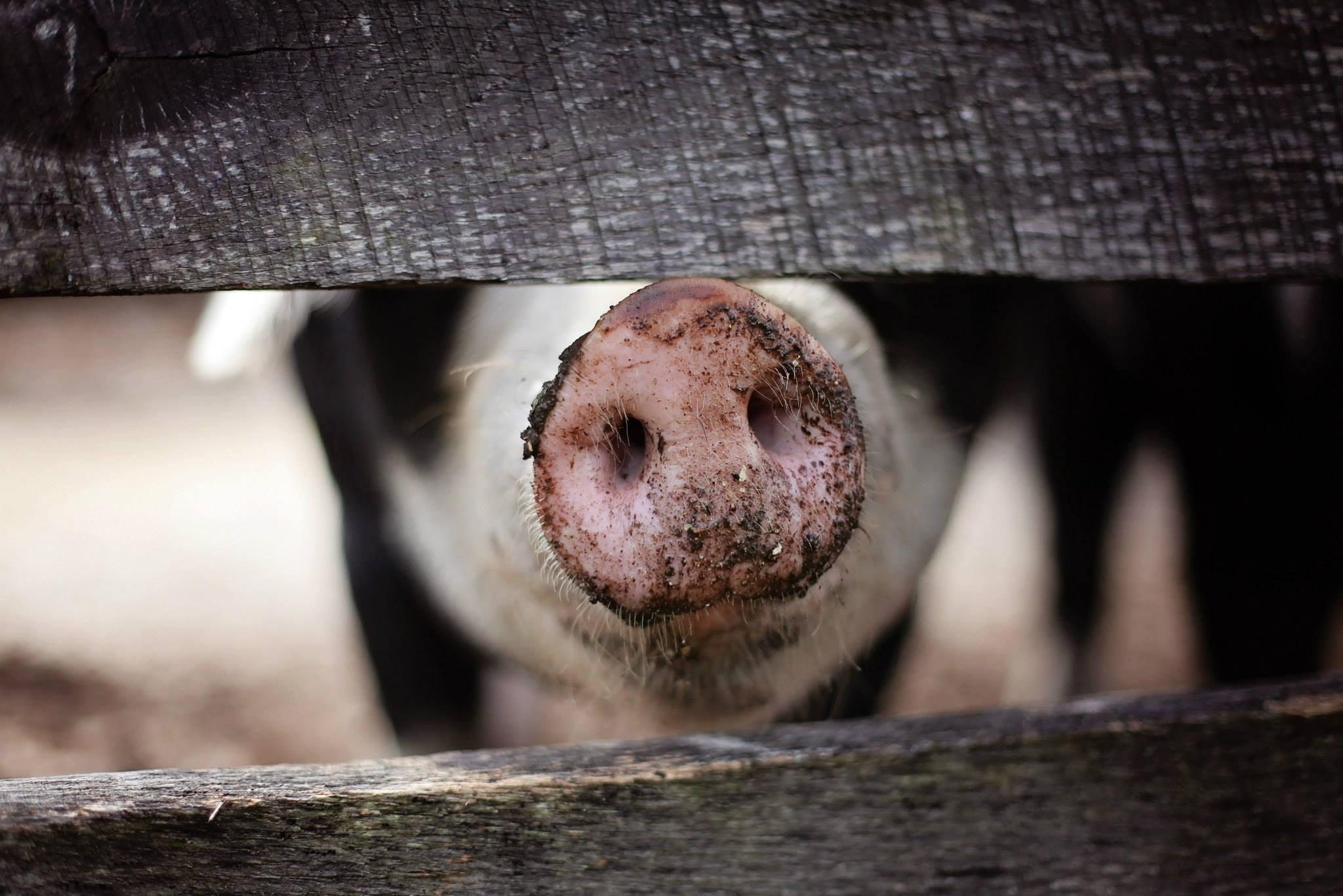 Gentle Barn Teaches Kids Compassion.jpg