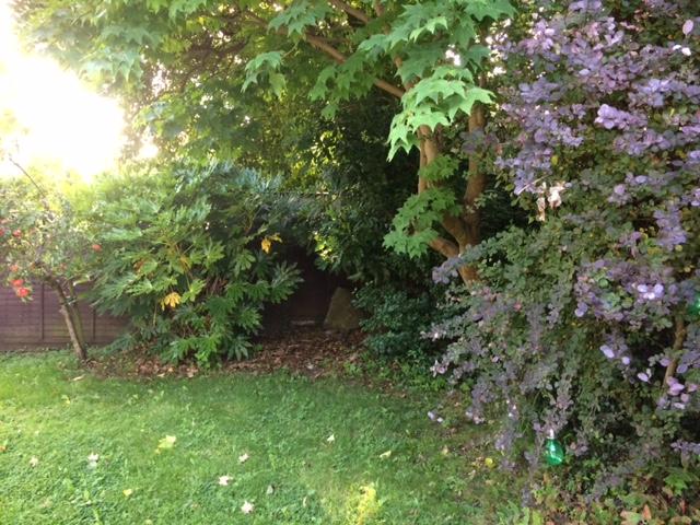 trees in the yard.JPG