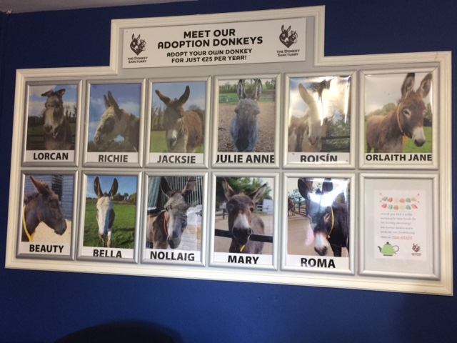 wall of donkeys.JPG