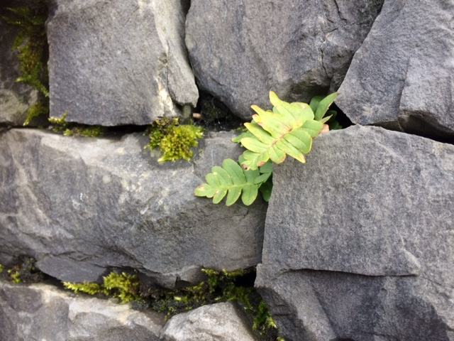 wall with leave.JPG