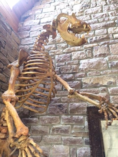The Cave Bear