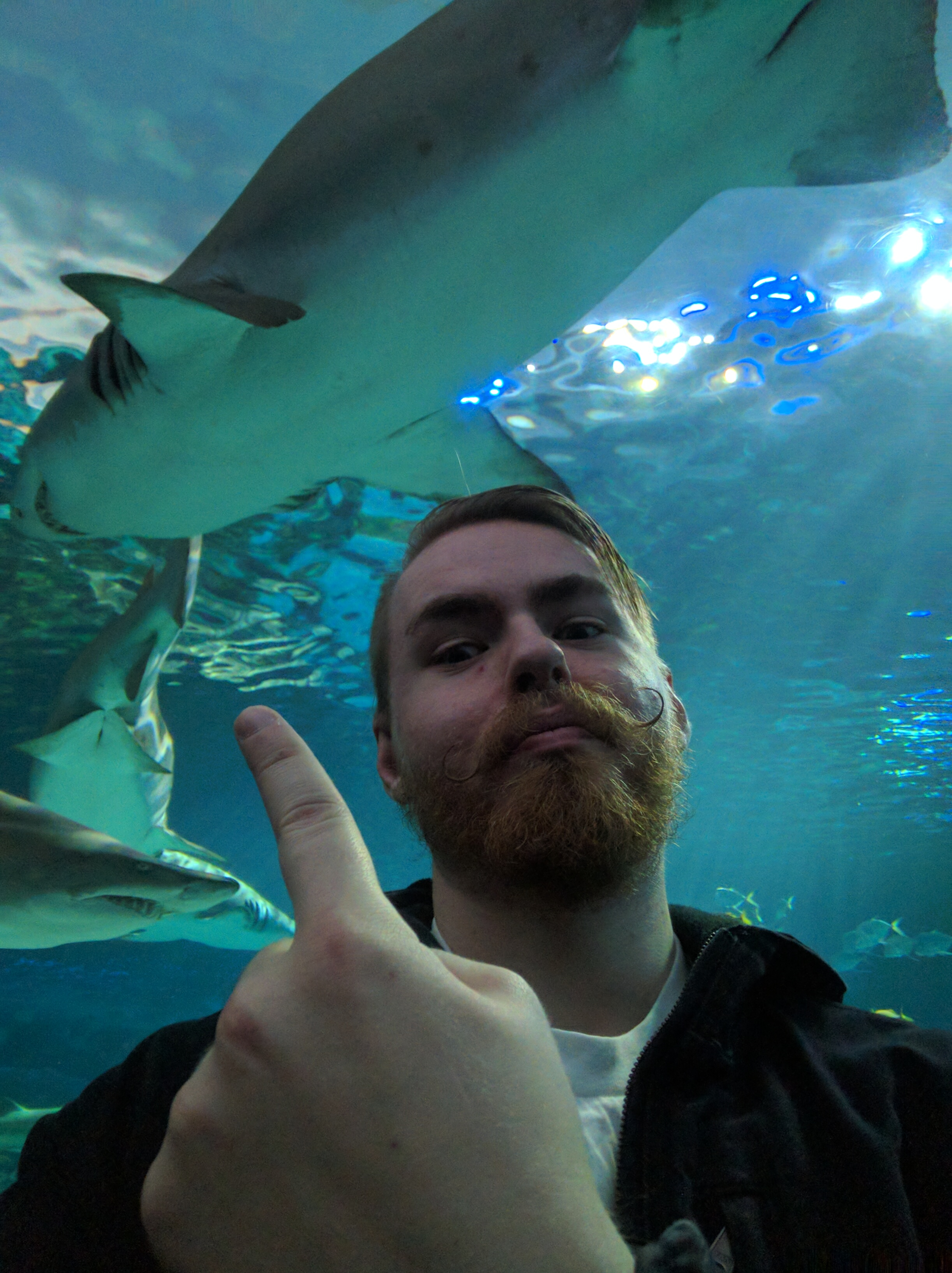 Here's a picture of me underneath some sharks.