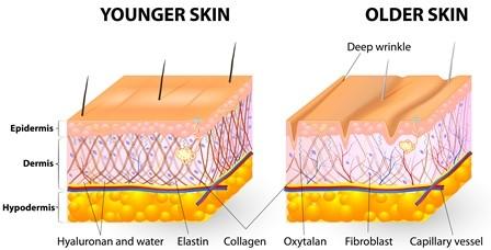 Younger_skin_vs_older_skin.jpg