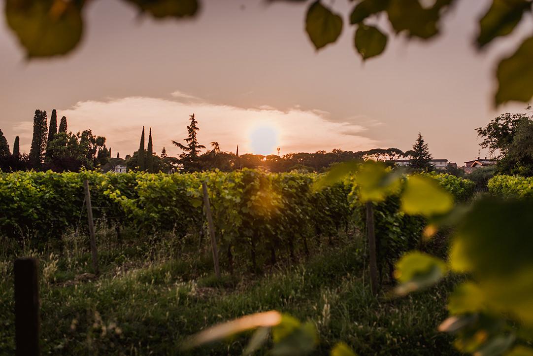 olive groves italian lake sunset