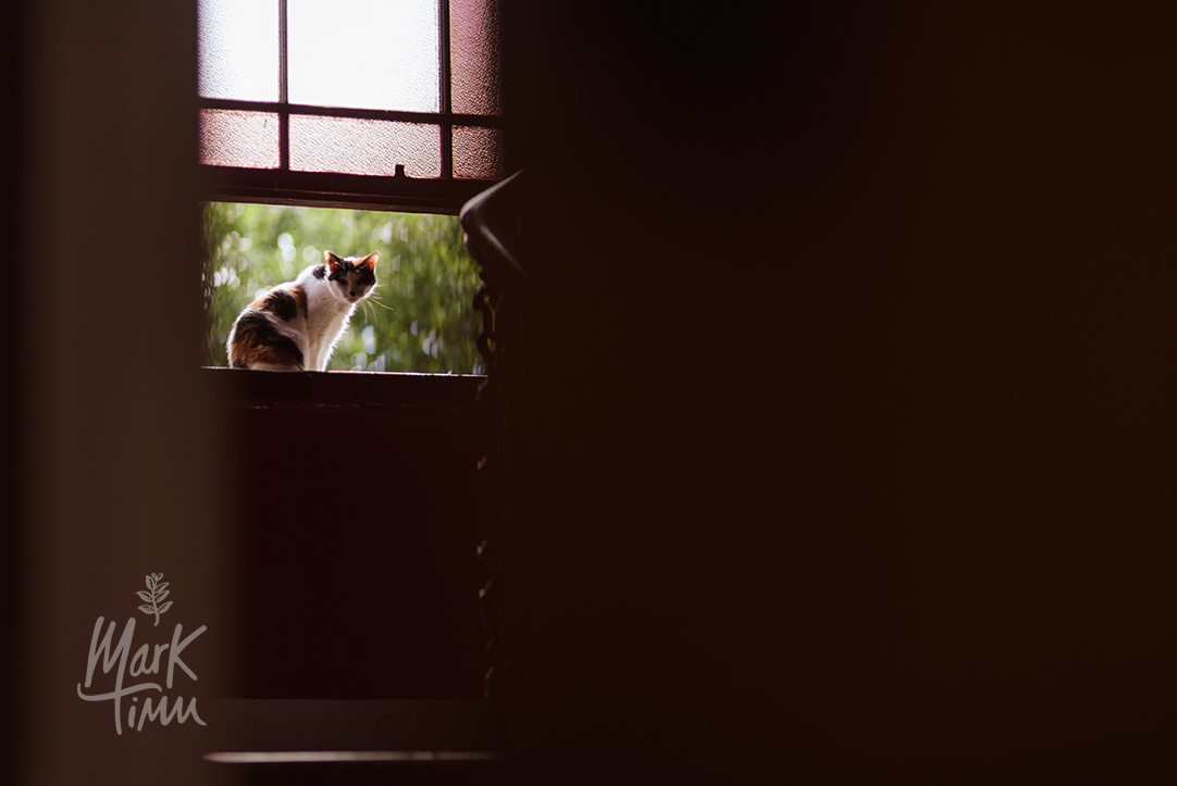 cats at wedding photos (1).jpg