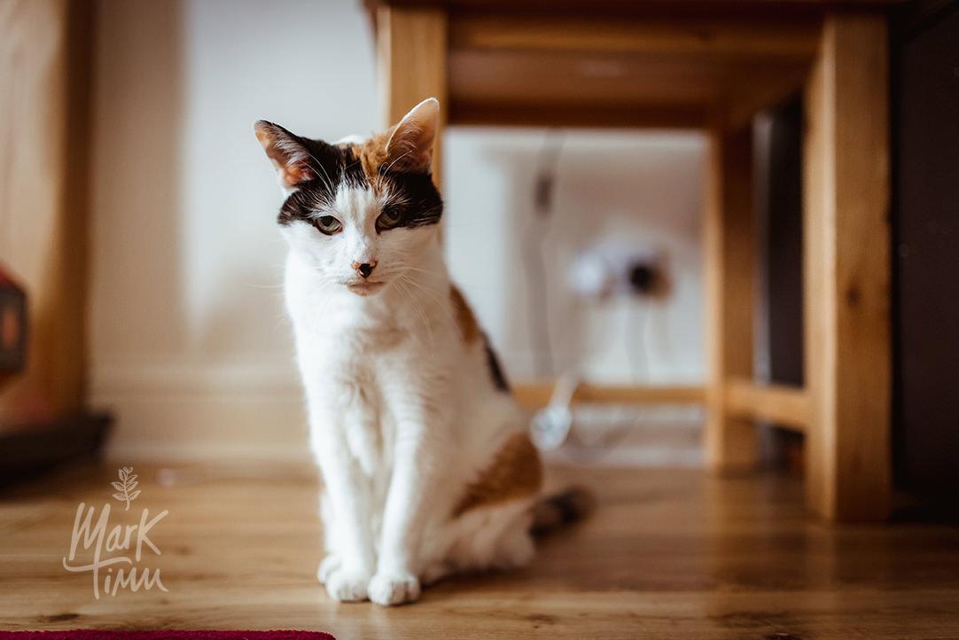 cats at wedding photos (3).jpg
