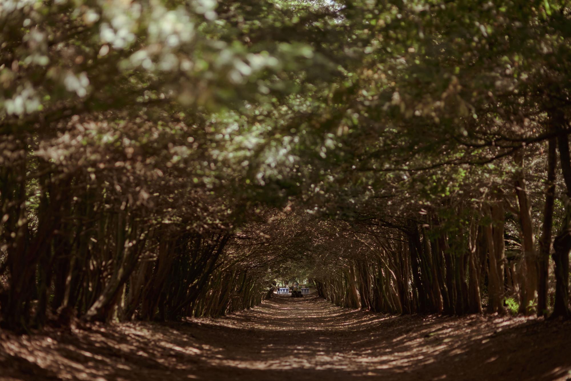 woodland-wedding-photography-scotland.jpg