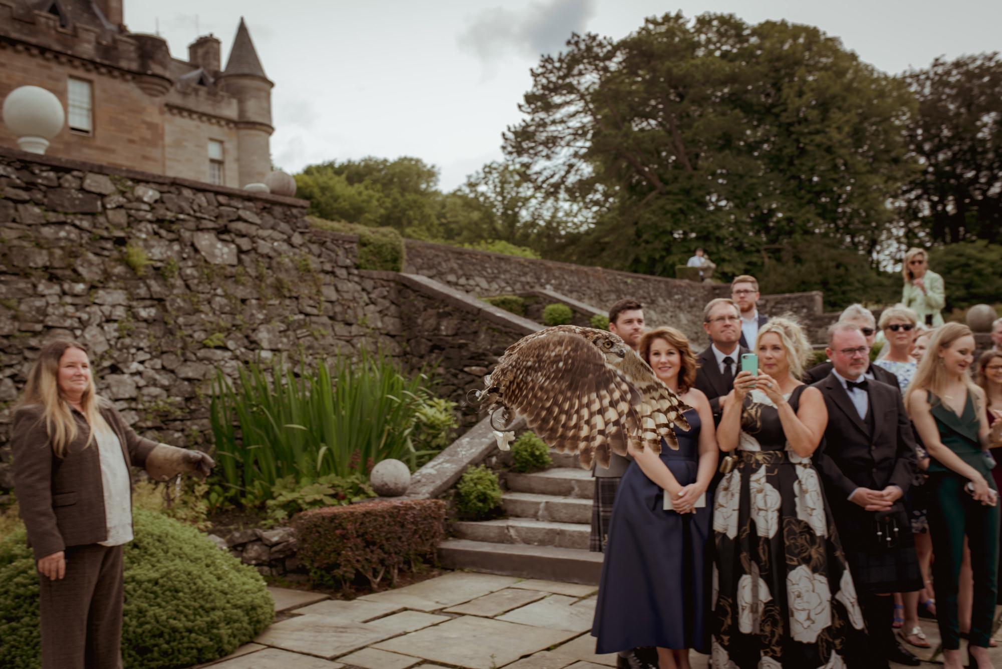 wedding-falconry-scotland.jpg