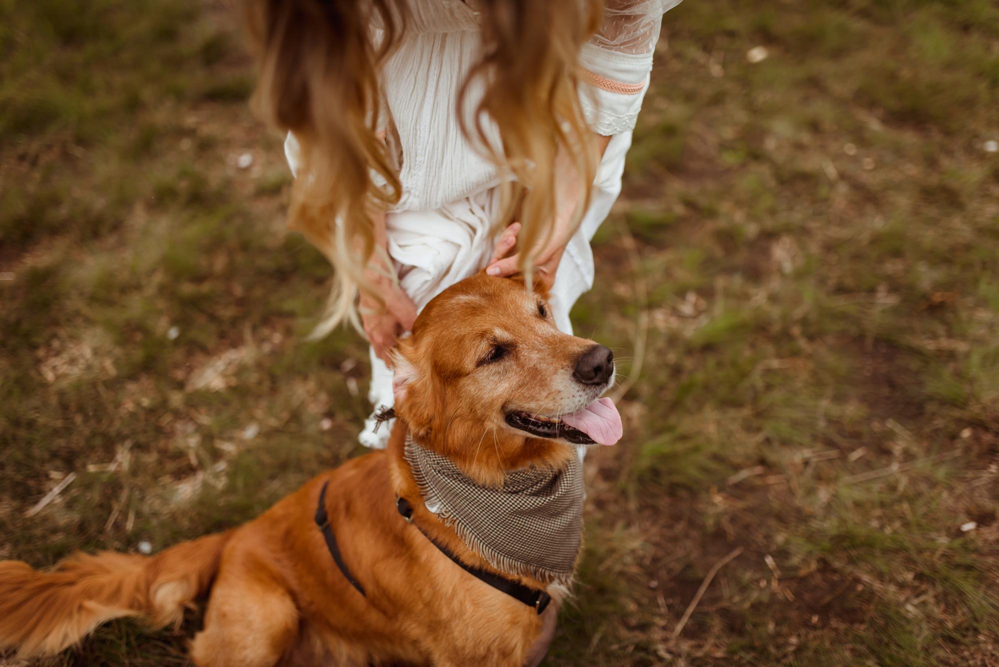 dog-friendly-wedding-destination-scotland (1).jpg