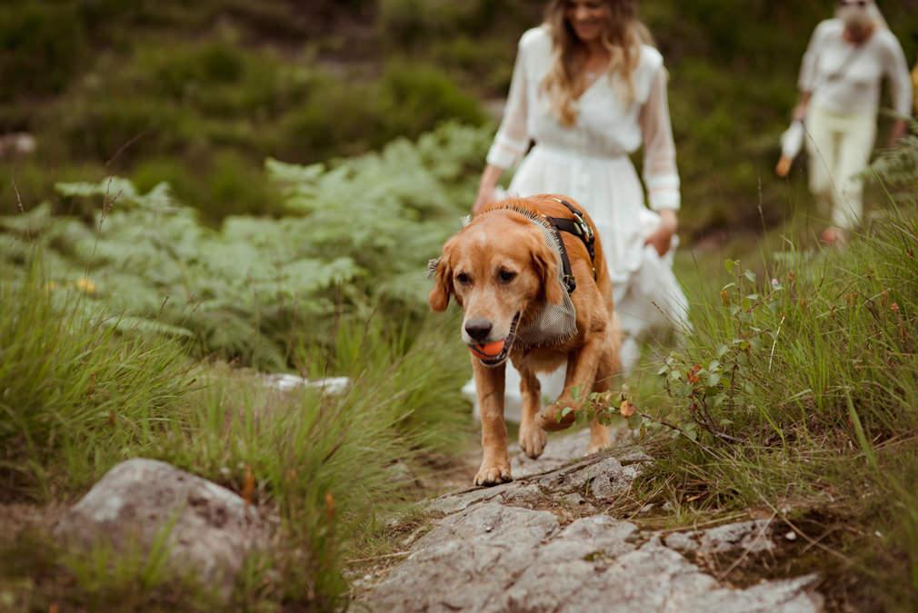 dog-friendly-wedding-destination-scotland.jpg