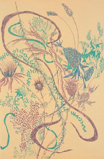 Wayside Flora V
