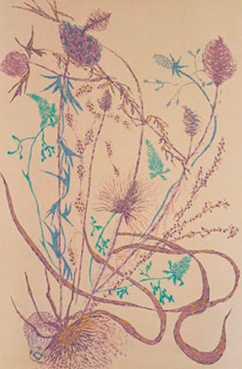 Wayside Flora VI