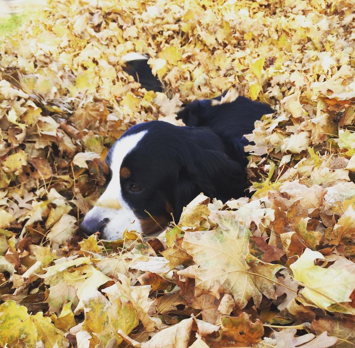 Fall in Utah.png