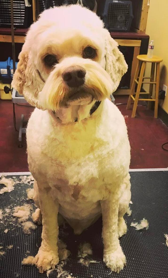Handsome Bentley.png