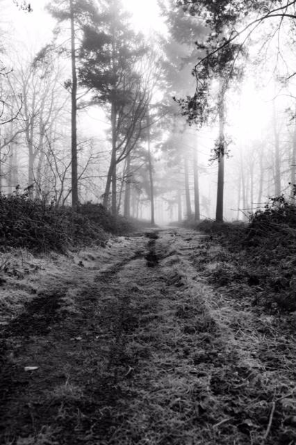 Walk in Blickling Estate in Winter