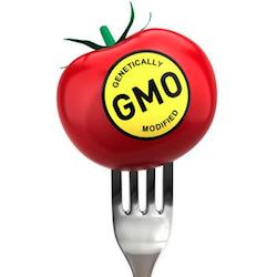 gmo-tomato-skew.jpg