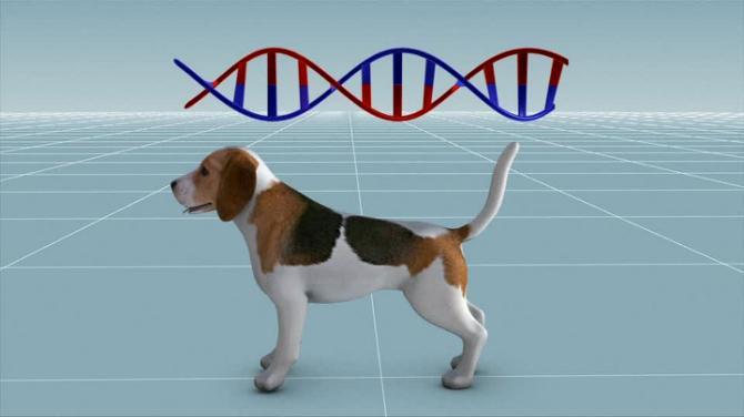 gene-edited-dog.jpg