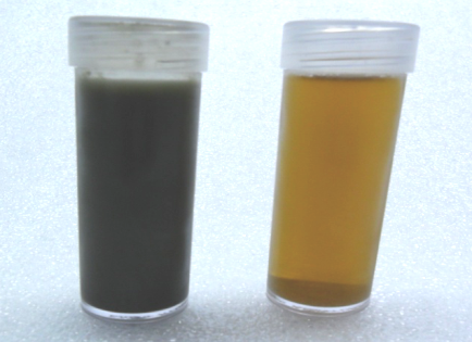 Stored Manure: Feed (left) and Filtrate (right)