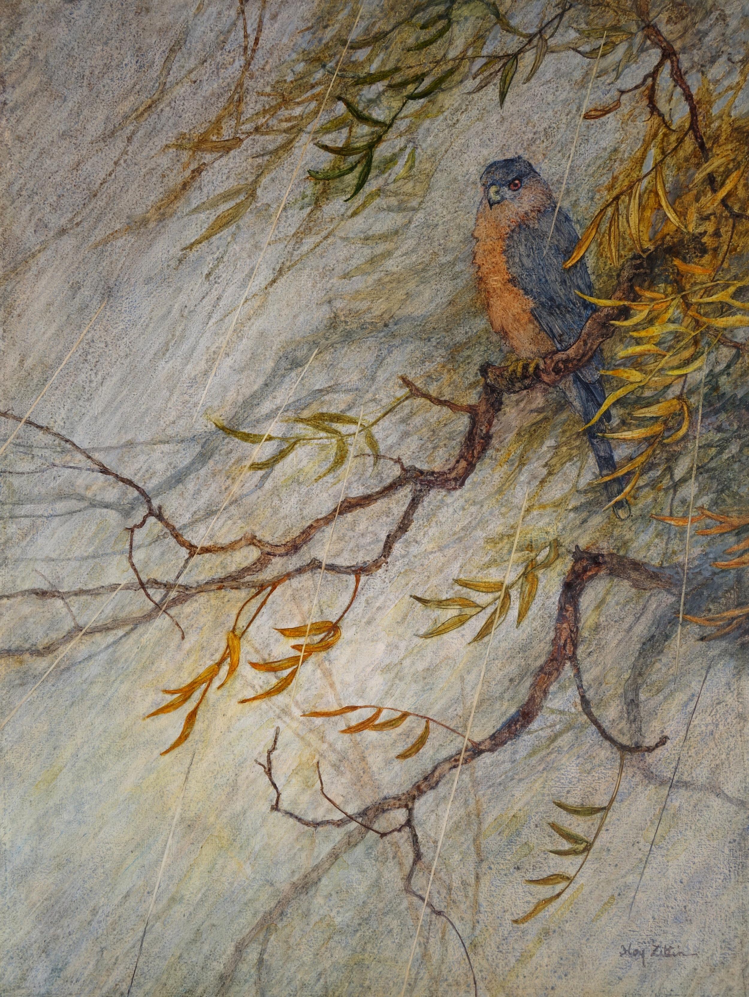 Cooper's Hawk in Storm 18 x 24.JPG