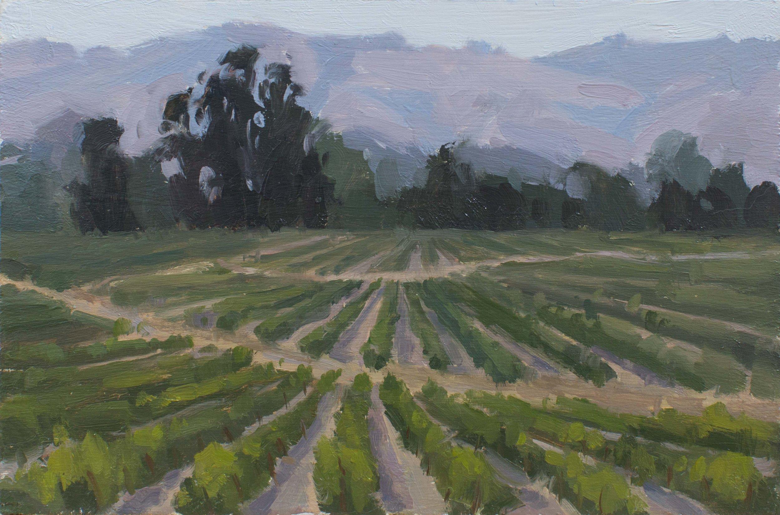 Sonoma Vineyards 6x9 .JPG