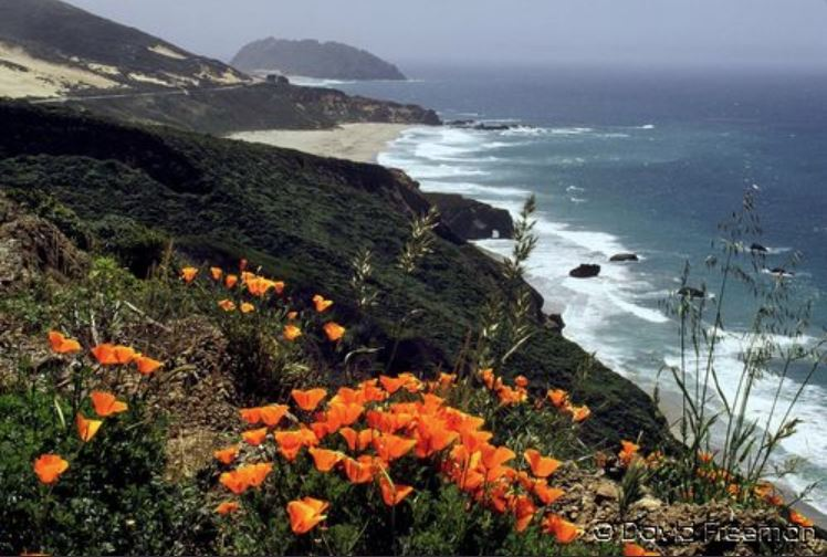 Poppies on California Coast,H. 30 x 20.JPG